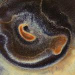 Profile photo of arianew